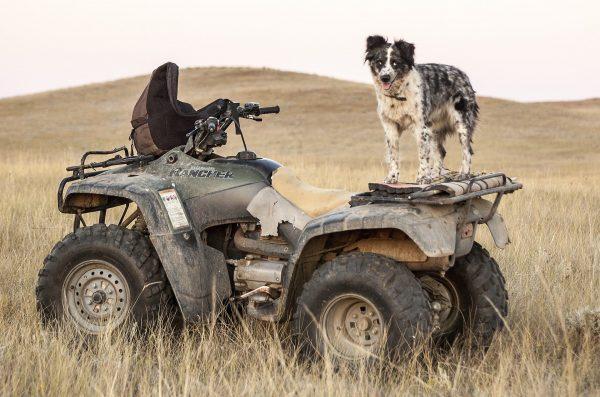 Hur mycket kostar en fyrhjuling egentligen?